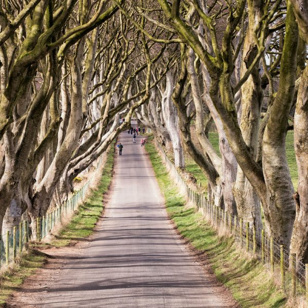 16514_The Dark Hedges